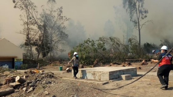 Kebakaran Hutan Lalap Gunung di Jawa Timur