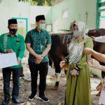 Gunakan Bungkus Daun Jati dan Besek Bambu, PPP Jombang Kurban Dua Ekor Sapi